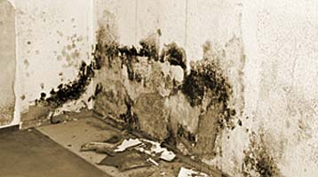 mold remediation and testing
